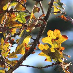 freetoedit remix leaveschanging fallcolors