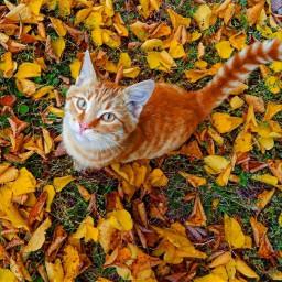 cat november2017 nature happynovember