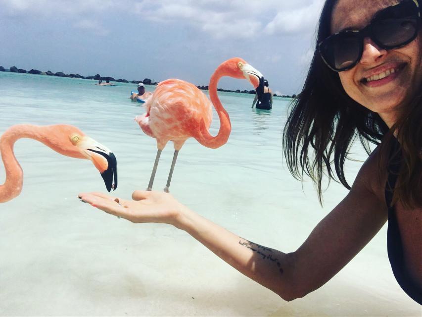 #aruba #onehappyisland #flamingobeach #pinkflamingo #summer #happy #polishgirl #travel #caraibes #flamingofever #summervibes #besttime