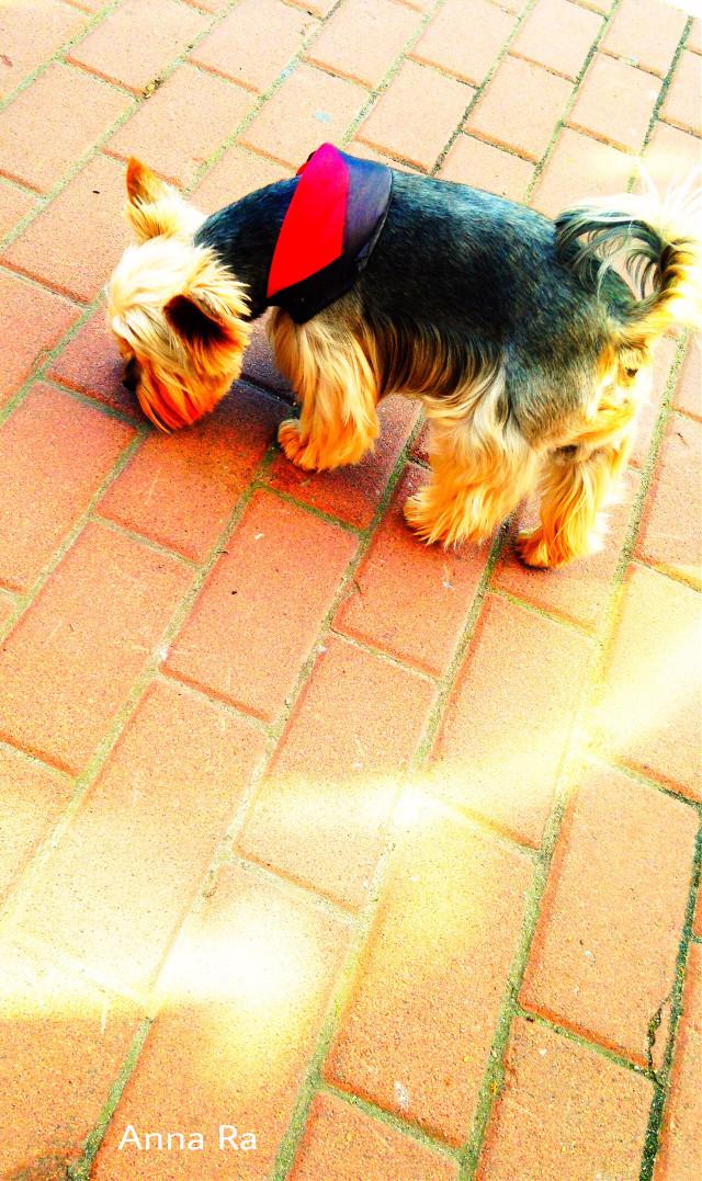 #freetoedit #myphotography #photography #photo #dog #artphotography #streetphotography #picsart #madewithpicsart #remixit #remixed