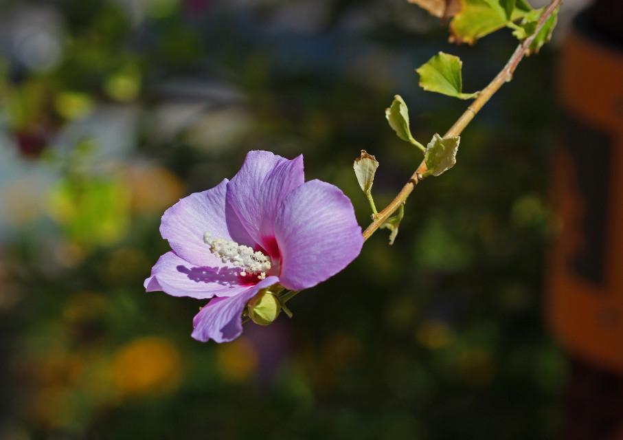 #wildflowers #purple flower #naturephotography