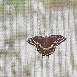 butterfly nets naturephotography