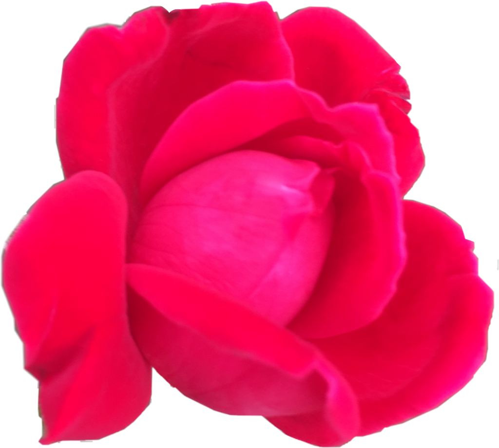 #rose#freetoedit
