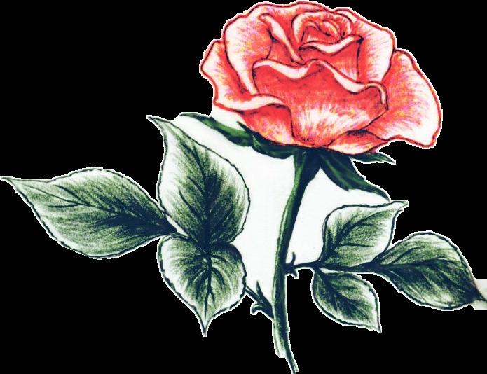 #pencilart#flower#nature