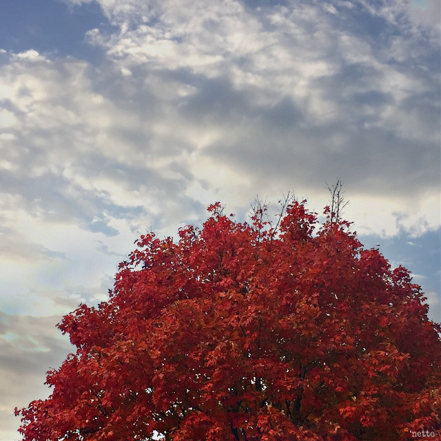 "#autumntree #againstthesky #freetoedit #myoriginalphoto thank you @pa for the feature i. ""most liked"""
