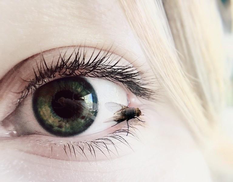 #madewithpicsart #myedit #creative #artistic #fly #eyes