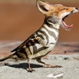 freetoedit animals animalhybrid zebra fox