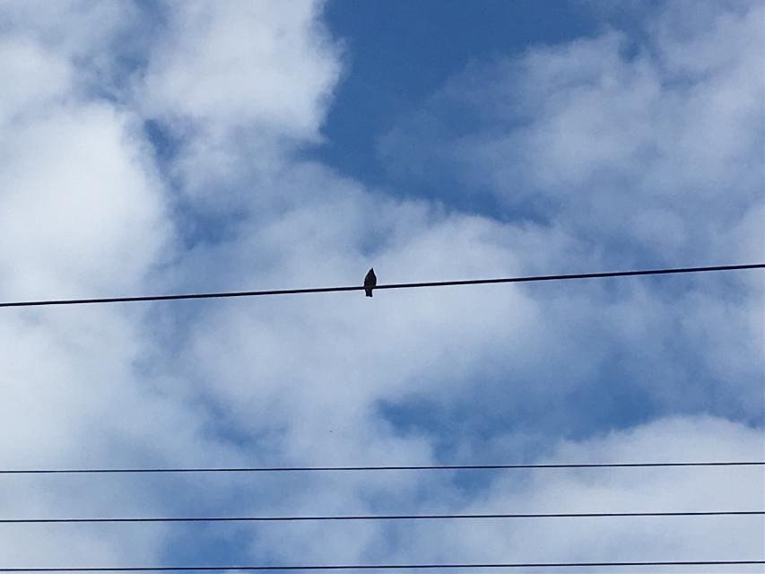 #freetoedit #bird #birdonawire #powerlines #sky #clouds #silhouetteagainstsky #silhouette #photography
