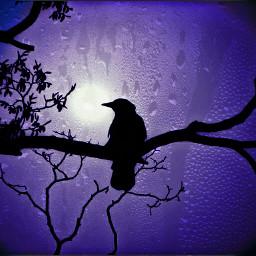 bnwandcolor crow darkedition darkedit darkartedit