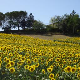 dpcfields fields