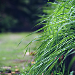 freetoedit garden grass drops dewdrops