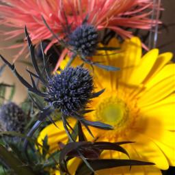 freetoedit nature flowers
