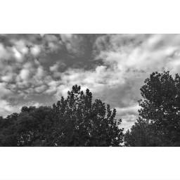 tree clouds black