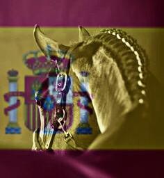 andalucía horse andaluc