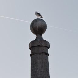 freetoedit bird seagull amazing cute