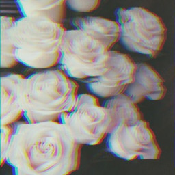 freetoedit white roses trippy black