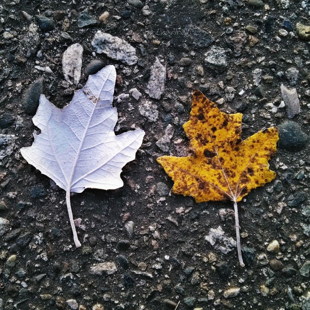 #photography #leaves #asphalt #autumn