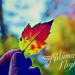 autumncollage freetoedit autumnvibes