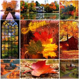 autumncollage freetoedit picsart