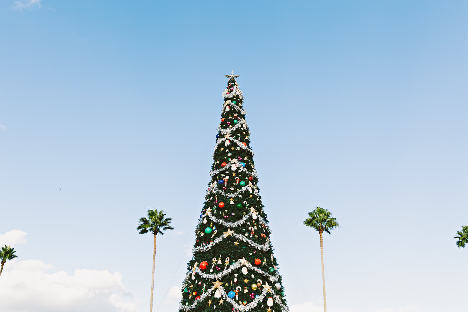 Believe in the magic of Christmas! Start remixing! Unsplash (Public Domain) #FreeToEdit #palms #tree #Christmastree #Christmas #blue #sky #winter #clouds #holidays #green