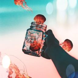 jellyfish jar colorful colors hand freetoedit