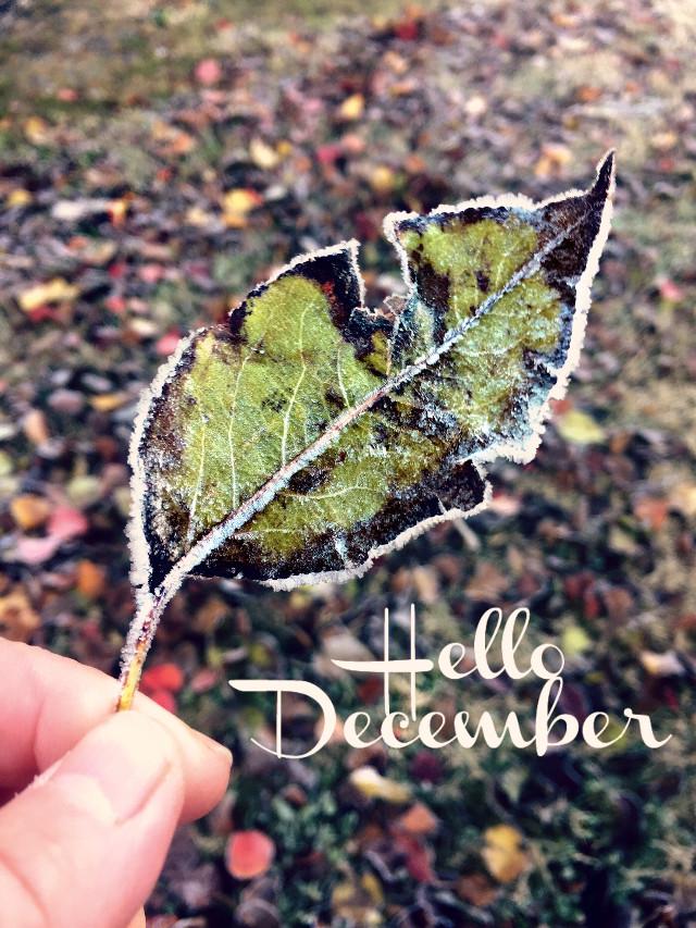 #freetoedit #myoriginalphoto #ftesticker #frost #leaf #winter