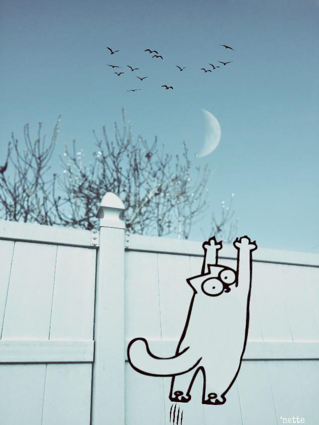 #wall #cat #simonscat #funny #moon #sky #trees @portraitsbynette