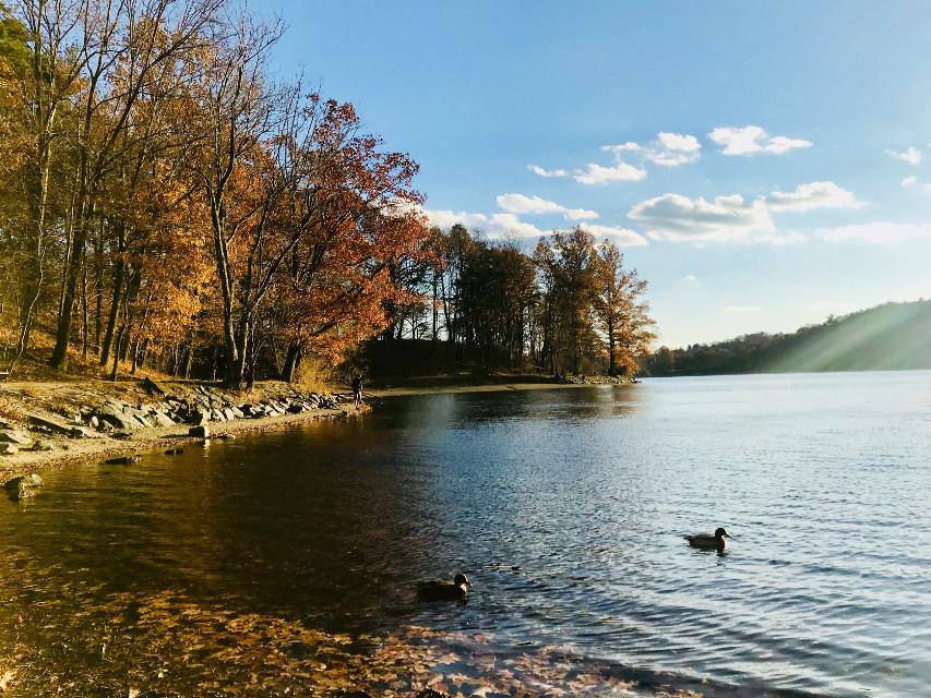 #freetoedit #nature #goldenhour #autumn