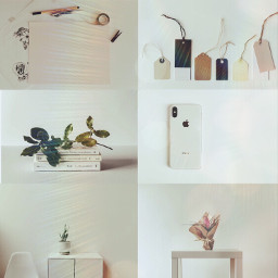 aesthetic white book plant paper