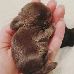 freetoedit conejos rabits❤😍❤😍 rabits