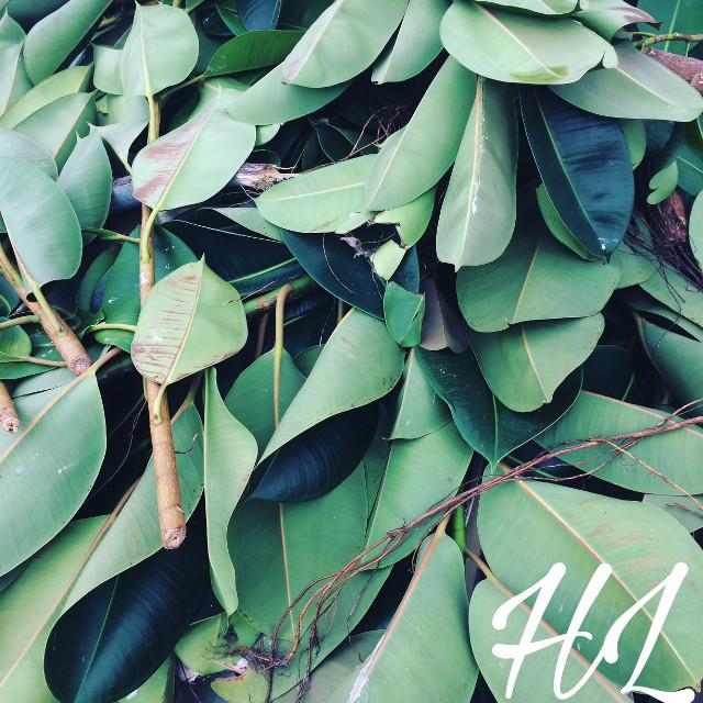 #freetoedit #nature #leaves #green