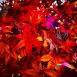 emotions fotography foglie foglirosse fotografianatural