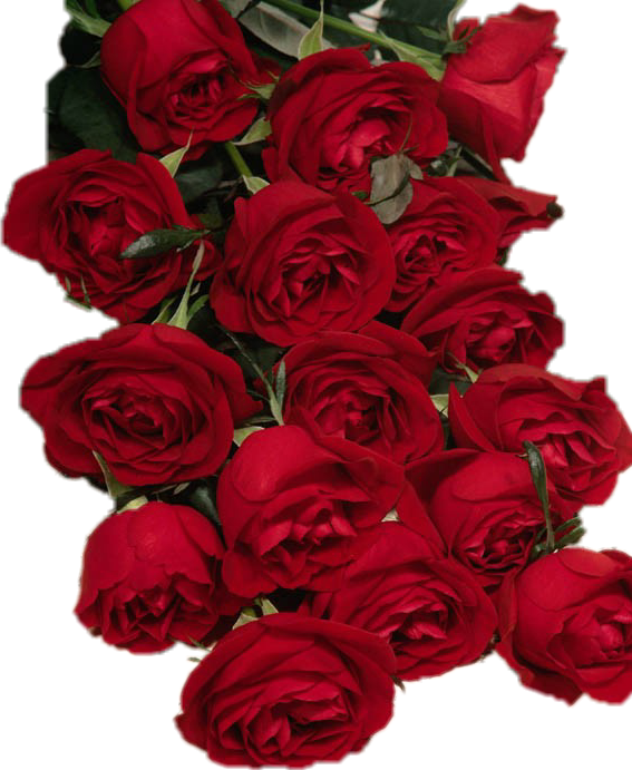 , #RED ROSES