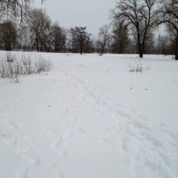 pcitssnowing itssnowing