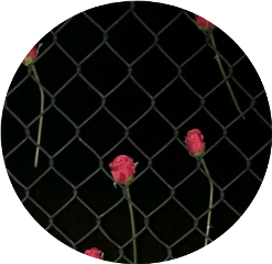 fence rose roses wire flower freetoedit