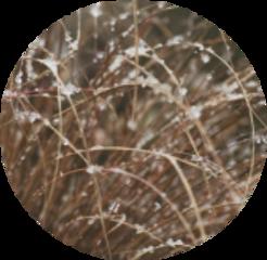 snow grass brown circle aesthetic freetoedit