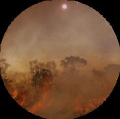 sun fire bushfire wildfire brown freetoedit
