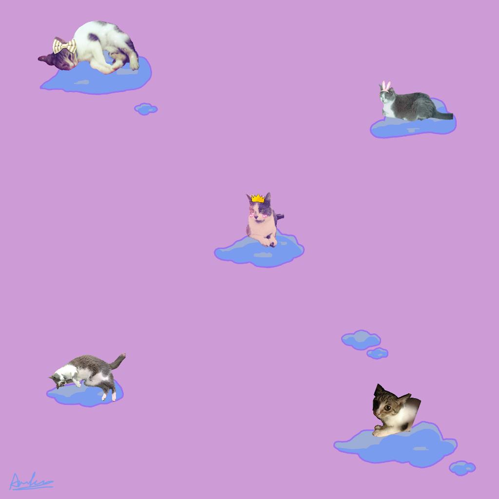 #catslover