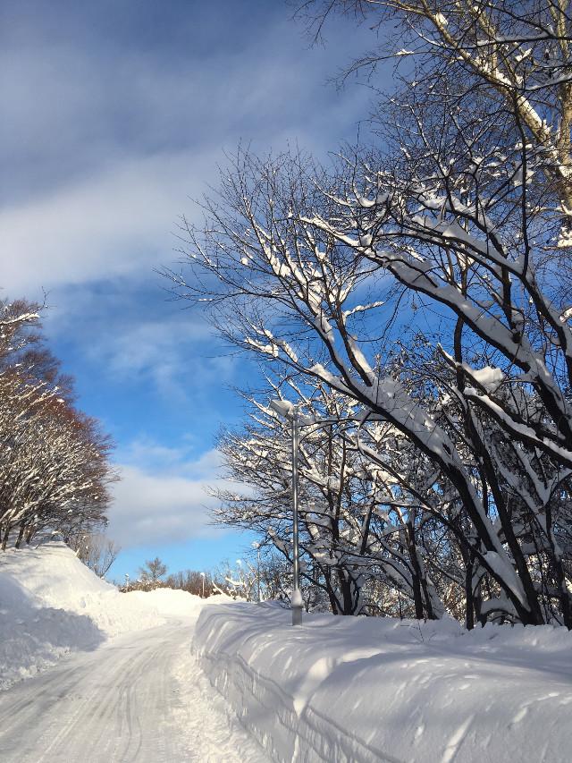 #pcitssnowing #itssnowing #freetoedit #trees #sky #path #park #snow #myphoto #hokkaido #蓝天白雪