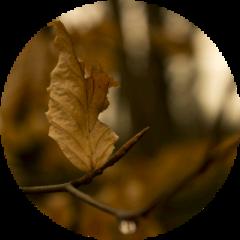 leaf branch nature brown circle freetoedit