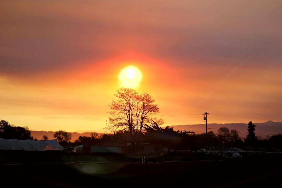 #pcsunrise #sunrise #pctree #tree