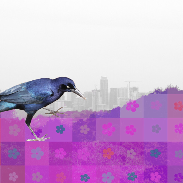 #gackle #doubleexposure #compositephotography #drawtool #draw #shapes #sticker #stickerart #cutout #bird