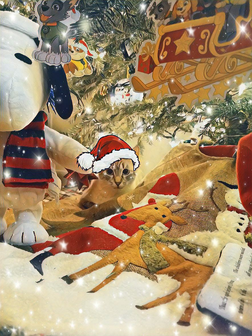 #mypic #Christmas #SantaHat