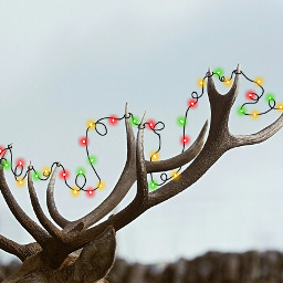 deerremix picsart animal lights leds freetoedit