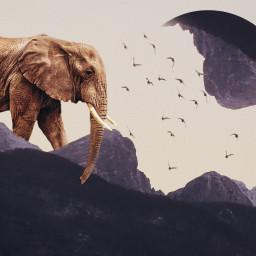 surreal elephant moon bird birds freetoedit