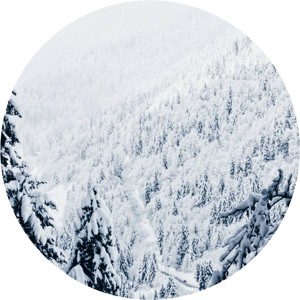 winter christmas snow forest aesthetic background