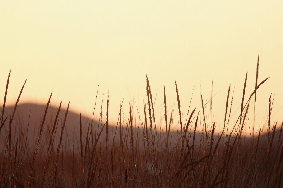 #nature #sunrisethismorning #goldenhour #coldwintermorning #clearskys #beautifulsunriselight #hillsbackground #peacefulandquietmoments #simplicityisbeauty #emotions #naturephotography