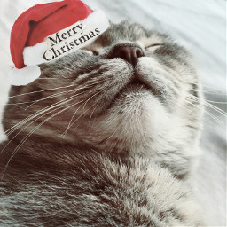 christmas2017 freetoedit