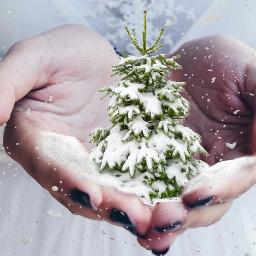 christmaseve edited hands tree snow op freetoedit