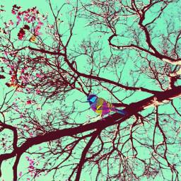 beautiful nature sky trees colorful